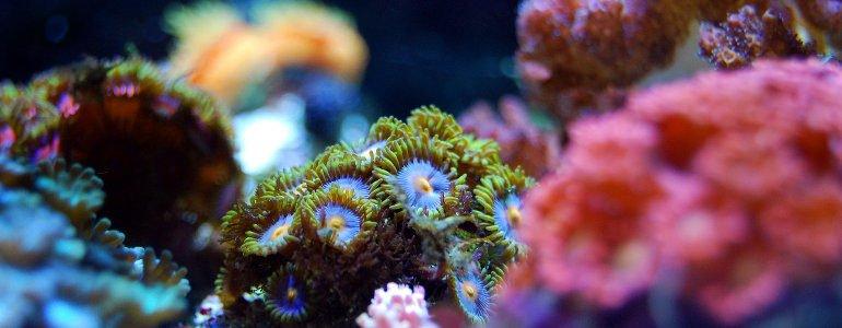 sango meeres koralle wirkung
